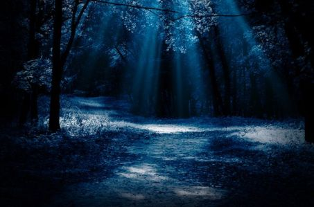 moonlight-forest_jpg_653x0_q80_crop-smart.jpg